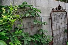 Old fence gates used as garden trellises via thegardenglove | linked from Dishfunctional Designs