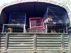 Enlightened Chinese public condemns dog meat consumption
