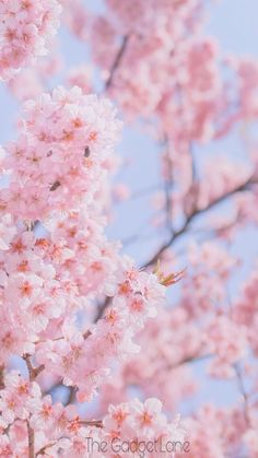 Floral Wallpapers for iPhone and Android. Click the link below to get the latest Tech News and Gadget Updates! Frühling Wallpaper, Floral Wallpaper Iphone, Spring Wallpaper, Galaxy Wallpaper, Flower Wallpaper, Nature Wallpaper, Wallpaper Backgrounds, Cherry Blossom Wallpaper Iphone, Floral Wallpapers