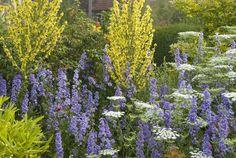 Our Plants   Great Dixter