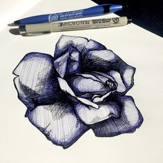 illustration, illustration of the day, rose, handmade, practice, sketch, art, arte, instaartist, tattoo, ink, pen and ink, my art, art of the day, drawing, draw, sketchbook, moleskin, rose tattoo, pen and paper, natures beauty, micron pens, nature, ink roses, illustrate, design, utah artist, tattoo design