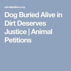 Dog Buried Alive in Dirt Deserves Justice | Animal Petitions