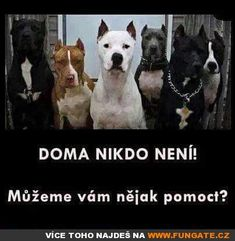Bear Grylls, Chuck Norris, Animals And Pets, Cute Dogs, Funny Jokes, Haha, Dog Cat, Funny Pictures, Pitbulls