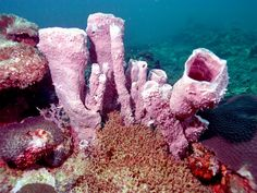 Coral reefs are underwater structures made from calcium carbonate secreted by corals. Coral reefs are colonies of tiny living animals found in marine waters that contain few nutrients. Most coral reefs are built from stony corals, which in turn consist of polyps that cluster in groups.