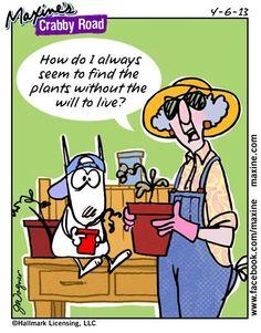 Maxine - Plants.