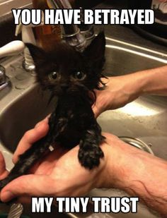 awww you just needed to smell better tiny cat
