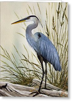 Great Blue Heron Shore Painting by James Williamson - Great Blue Heron Shore Fine Art Prints and Posters for Sale Watercolor Bird, Watercolor Paintings, Watercolors, Fine Art Paintings, Horse Paintings, Pastel Paintings, Bird Drawings, Animal Drawings, Pencil Drawings