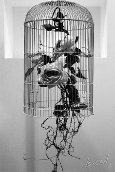 the indiscreet lens: Prison  /  Prisión