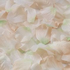 Ivory Petals for Weddings (approx 250)