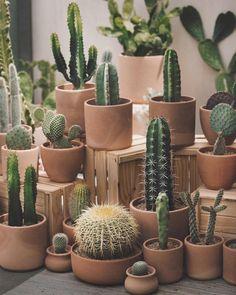 50 DAZZLING YET BEAUTIFUL CACTUS POTS – Page 40 of 50 House decoration; Garden decoration, home improvement, cactus aesthetics