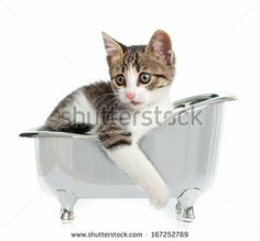 Puppy cat in the bathtub on white background - stock photo