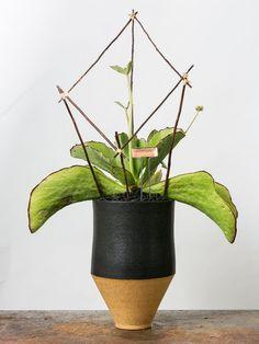 These Avant-Garde Arrangements Look So Right in Ben Medansky's Vases Ceramic Planters, Planter Pots, Palm Fronds, Unusual Plants, Pop Up Shops, Modern Ceramics, Persephone, Garden Landscaping, Flora