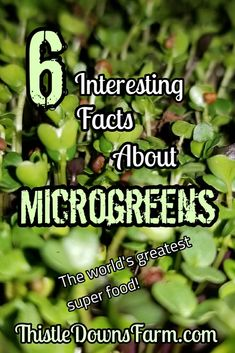 Microgreens are an incredible superfood and they are super easy to grow! Here are six reasons why your should start growing your own microgreens today! Indoor Gardening Supplies, Indoor Vegetable Gardening, Organic Gardening, Gardening Tips, Micro Garden, Growing Microgreens, Plant Growth, Grow Your Own Food, Growing Flowers