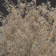 Silver and gold Babys breath