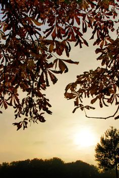 Free stock photo of autumn, hamburg Free Photos, Free Stock Photos, Photography Portfolio, Autumn, Celestial, Sunset, Pictures, Outdoor, Hamburg