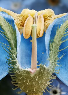 Scanning electron micrograph, false colored, of the parts of a flower.
