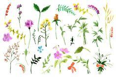 Wild flowers collection. Watercolor by Rasveta on Creative Market