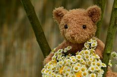 Free Image on Pixabay - Bouquet, Teddy, Teddy Bear Happy Teddy Day Images, Happy Teddy Bear Day, Teddy Bear Images, Teddy Bear Pictures, My Teddy Bear, Big Teddy, Teddy Day Wallpapers, Citations Victor Hugo, Get Well Flowers