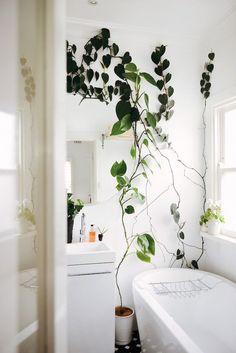 Kleiner Urwald im Badezimmer – #pflanzenfreude