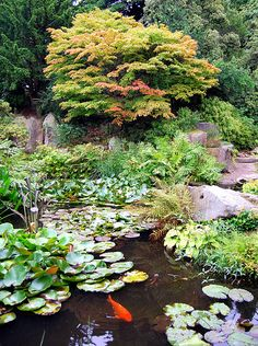 Rock Garden & Pool, Birmingham Botanical Gardens by v1ctory_1s_m1ne, via Flickr