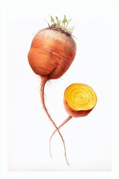 Gorgeous - great composition and detail. Beetroot 'Burpee's Golden' by artist Sonja B. White.