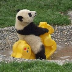 panda baby! OMG this photo is so cute! Go panda baby!