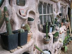 Cob cactus cultivation wall, Mountain Gardens.