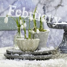 February-my month - Winter Garden Days And Months, Months In A Year, 1 Year, Valentine's Day Quotes, February Images, Neuer Monat, Winter Songs, Winter Images, New Month