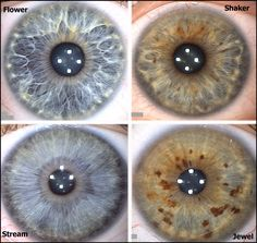 """The four iris types that correspond with the four energy types. Flower=T1, Stream=T2, Shaker=T3, Jewel=T4. """"Flowers like to be organized, but have difficulty sticking with any system for long. They tend to try out a new system for a while, believing it will improve their lives, and then lose interest and go on to something else."""" <-BAHAHA"""