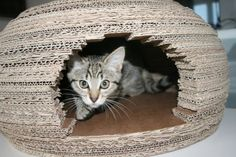 maison de chat en carton, habitation de chat en forme d'igloo et chat mignon
