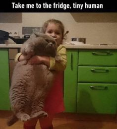 Tagged with funny, cute, cats, happy, dump; I love cats dump. Memes Humor, Funny Animal Memes, Cute Funny Animals, Cute Baby Animals, Funny Cute, Hilarious, Funny Memes For Kids, Funny Dogs, Animal Jokes