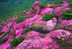 Mt. Hii-ji, Oita, Japan
