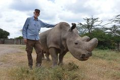 To Ringo With Love - A note from Ol Pejeta