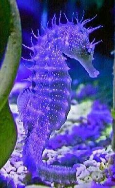 The Aquarium Fish Lovers Beautiful Sea Creatures, Animals Beautiful, Salt Water Fish, Water Animals, Sea Dragon, Paludarium, Colorful Animals, Beautiful Fish, Tier Fotos