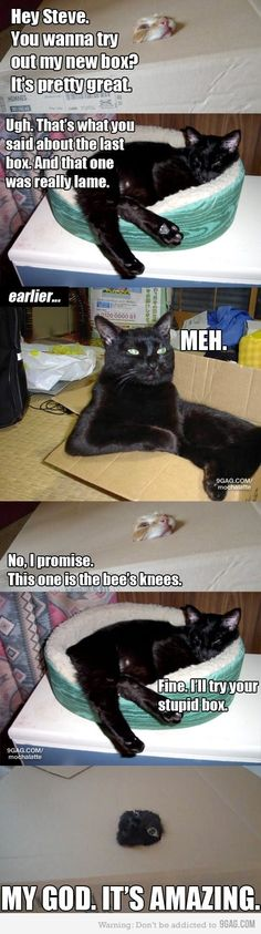 cats in a box--I thought you'd like this, Lizzy!  @Liz Mester Mester Huereque Gilbert