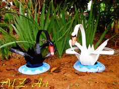 Cisne branco e cisne negro