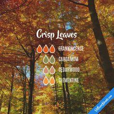 Crisp Leaves — Essential Oil Diffuser Blend
