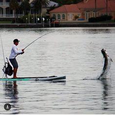 tarpon fishing - saltwater paddle board fishing