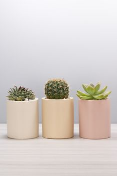 Have a look at our favorite succulent products. In this shop, you will find our ebooks, and affiliate links to succulent products. Concrete Pots, White Planters, Concrete Planters, Planter Pots, Colorful Succulents, Small Succulents, Plant Aesthetic, White Aesthetic, Succulent Gifts
