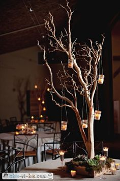 The tall round tables will have tall manzanita trees with fresh green moss and clusters of green succulents, blue thistles, and green orchid blooms on the base and bits of Spanish moss hanging from the branches.