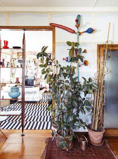 """A casa di uno dei nostri clienti più affezionati, Sergio Colantuoni, uno stelo azzurro del """"Baccellone aereis"""" di Roberto Cambi."""