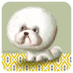 sohogarth ... Originating from the Med the Bichon Frise is my Dog a Day number 26. #bichonfrise