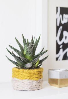 DIY woven succulent holder