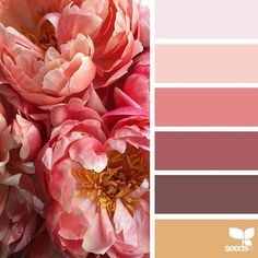 today's inspiration image for { peony palette } is by @fairynuffflowers ... thank you, Steph, for another breathtaking #SeedsColor image share!