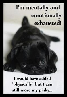 Little black pug puppy lying on floor. Click the pic for more awwww ___ Love this Pugs? Visit our website now! Cute Pugs, Cute Puppies, Dogs And Puppies, Doggies, Terrier Puppies, Chihuahua Puppies, Bulldog Puppies, Cute Baby Animals, Animals And Pets
