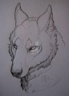 Wolf-head study. by MonsterMyrr.deviantart.com on @DeviantArt