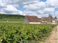 Le clos Vougeot, one of the most famous vineyards of Burgundy in Côte-d'Or