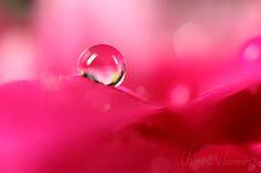Macrophotographie - Clément Wurmser : photo gouttes d'eau, gouttes de pluie, gouttes de rosée