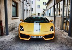 yellow & stripe