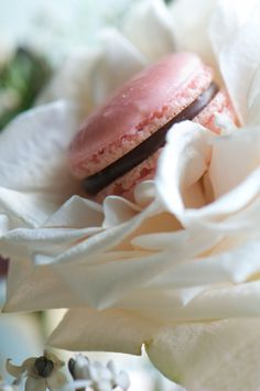 a macaron has never looked so good nestled in a flower